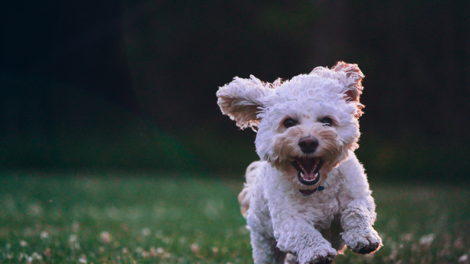 Photo of a happy and healthy puppy.