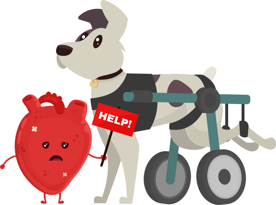 A dog with a heart condition that is covered by pet insurance