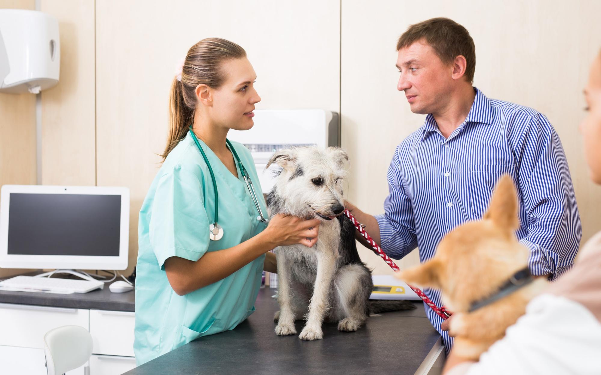 A pet parent getting treatment at the vet