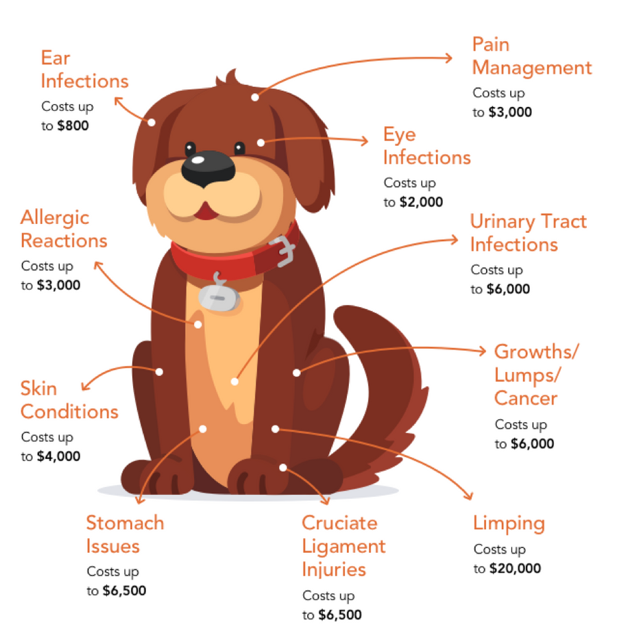 Diagram detailing various medical costs that your dog might encounter