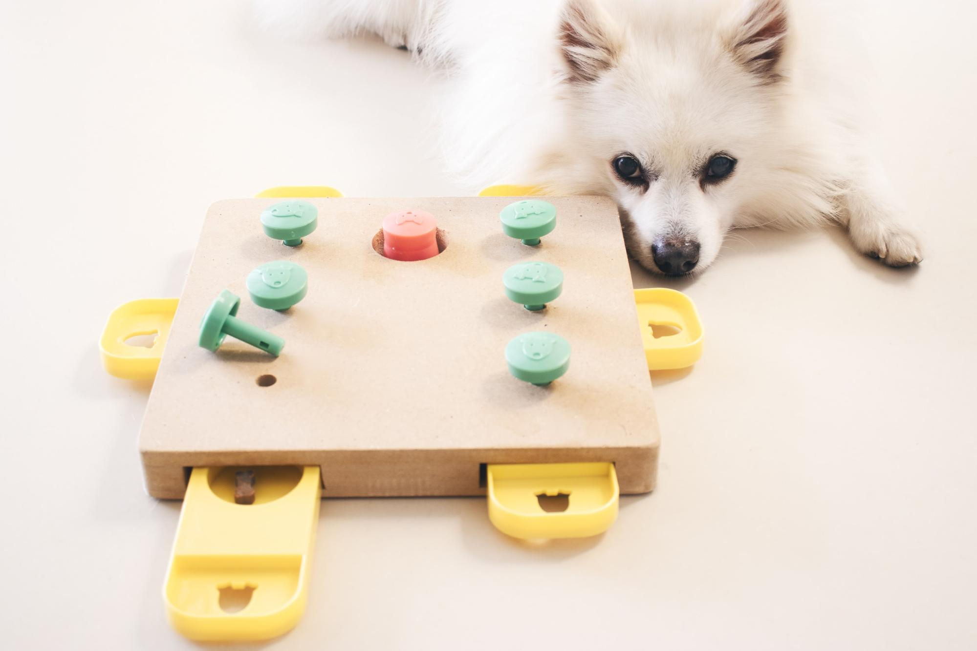 A dog playing with a fillable puzzle toy